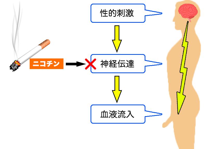 ニコチンと神経伝達の関係
